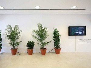 intervencions_botanica02